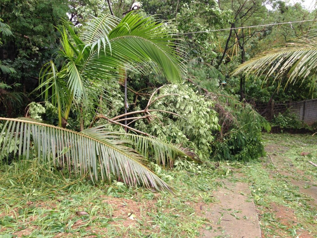 Trees were down at APNTS but no injuries or significant building damage were reported.